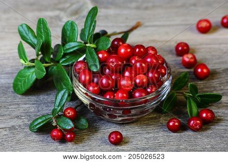 Cowberry - berries and leaves on the gray wooden table, close-up