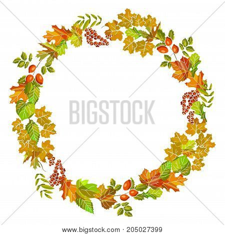 Autumn leaves wreath decoration or fall foliage of maple, chestnut or birch leaf, rowanberry and rowan or oak acorn and dog-rose, elm tree and aspen leaf. Vector template for autumn thanksgiving sale