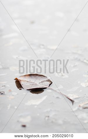 Autumn leaf floating on the water surface.
