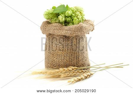 Beer brewing ingredients Hop cones in sack and wheat ears isolated on white background. Beer brewery concept. Beer background