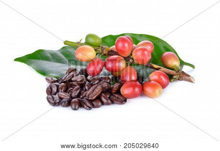 fresh coffee beans with stem and roasted coffee beans arabica strong blend on white background