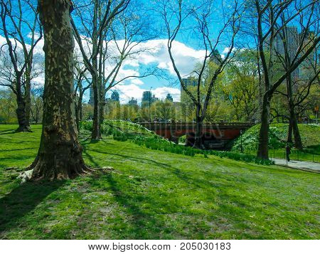 Spring is Coming to the Park in NY