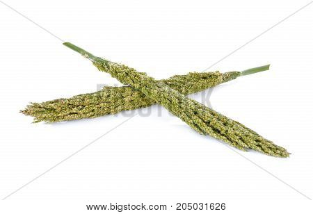 millet with stem on a white background
