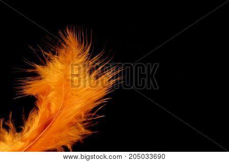Orange Feather For Halloween