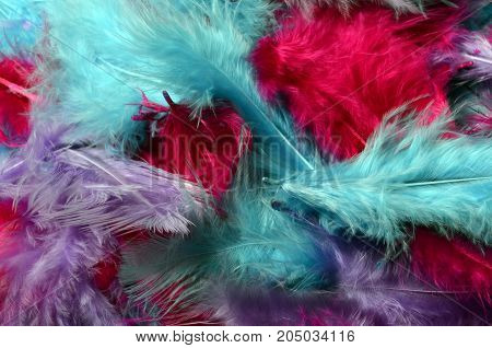 Colored feathers, blue, purple and pink, for background