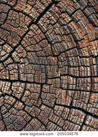 A large tree trunk. Rings, cut in macro photography.