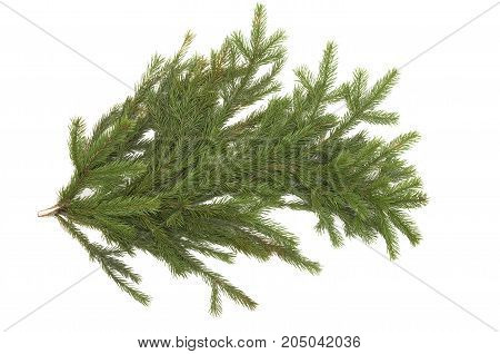 Christmas tree branches isolated on white background. Christmas decoration.