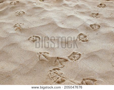 treads of Seagull on the sand beach in summer