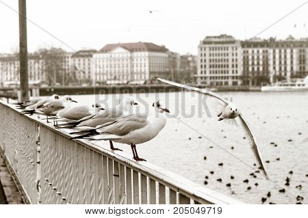 Seagulls sitting on a railing by the Hudson River.