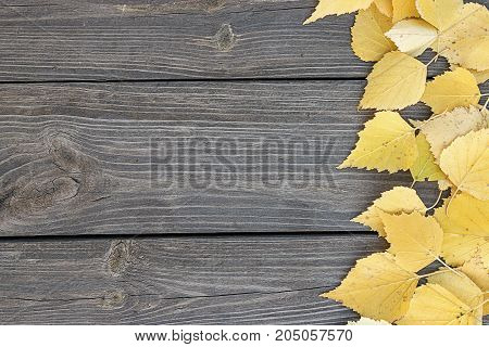 Autumn background. Autumn leaves and berry over wooden background.