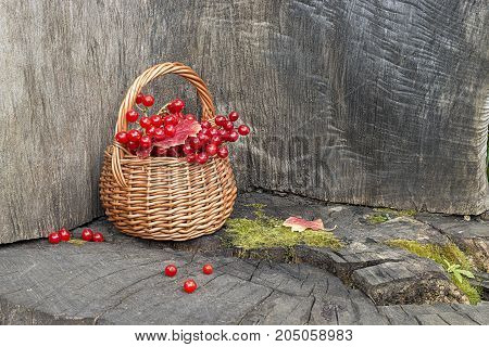 Small basket with autumn red berries on wooden table. Autumn still-life.
