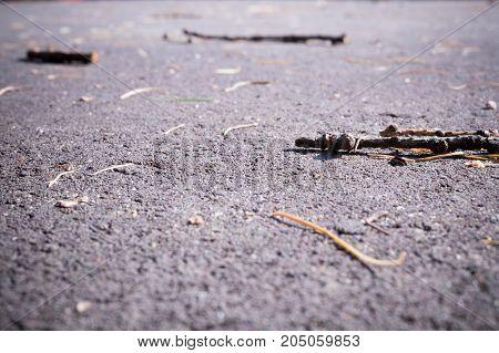 Asphalt at summer with sticks. close up background.