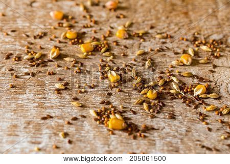 Close up seeds of corn, wheat, oat, barley, millet scattered on table organic food concept