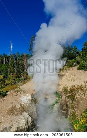 A smoking Geyser in the Mud Volcano Area: Yellowstone National Park