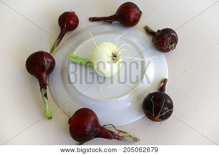 saying no man is an island proverb metaphor with white onion among red ones