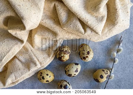 Easter stillife with quail eggs and willow branch on blue background