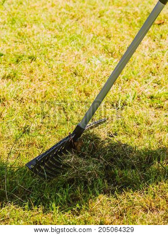 Orange Rake On Stick Collecting Grass, Garden Tools