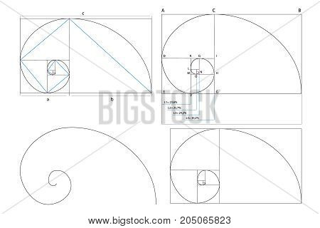 Golden ration section line frame vector illustration