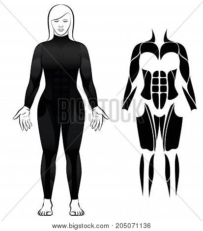 Wetsuit - woman in black diving suit, and abstract black figure or icon of the largest female muscles - isolated vector illustration on white background.