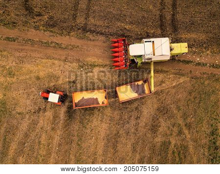 Corn maize harvest aerial view of tractor and combine harvester unloading harvested crop grains into the trailer