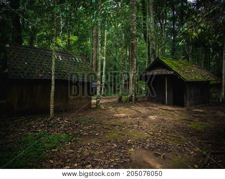 Old Wooden hut in rain forest in dramatic fantasy style.