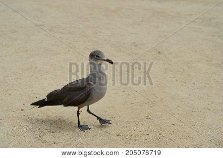 Funny Bird Walk On The Sand On The Coast