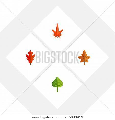 Flat Icon Leaf Set Of Aspen, Hickory, Frond And Other Vector Objects