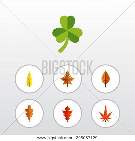 Flat Icon Maple Set Of Leaf, Foliage, Frond And Other Vector Objects