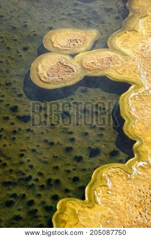 Thermophilic bacterial mats in Yellowstone slime pools