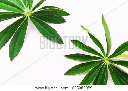 Natural Background With  Two Green Leaves.