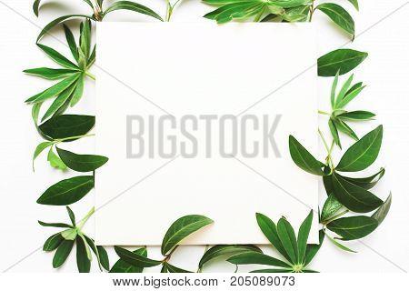 Frame Of Green Leaves, Letterhead For Writing Text.