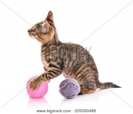 The cat is isolated on white. kitten is played with a ball of thread. young player in the ball. nba player. cat poster