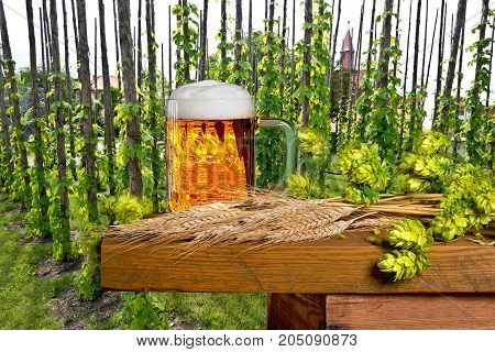 traditional hop garden with beer glass and malt