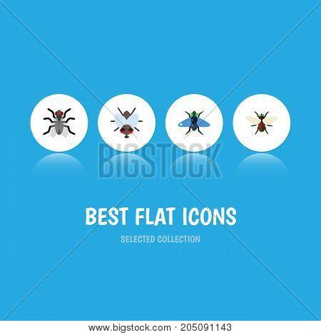 Flat Icon Fly Set Of Buzz, Gnat, Bluebottle And Other Vector Objects