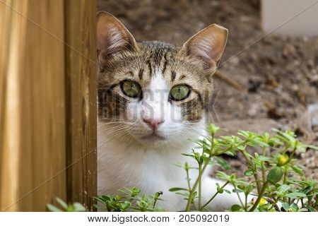 A brown-white cat with green eyes and a torn off piece of ear looks at you