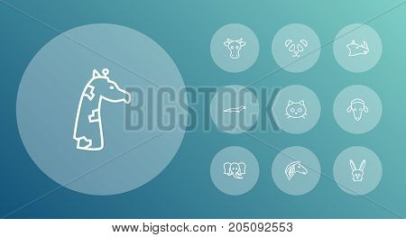 Collection Of Giraffe, Rhino, Mammal And Other Elements.  Set Of 10 Zoology Outline Icons Set.