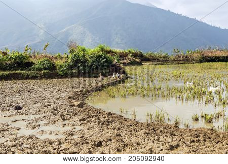 Rice Fields On Terraced Mountain Farm Landscapes.