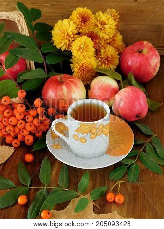A cup of tea surrounded by autumn harvest. Rowan berries, apples and leaves around, Autumn composition on a wooden background