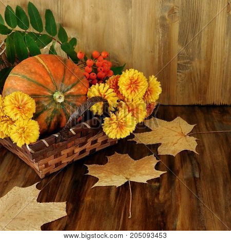 Pumpkin in a wicker basket with flowers, rowan and dry leaves. Autumn still life. Square cropping