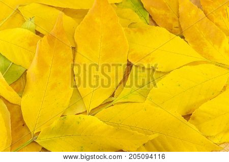 Yellow Autumn Leaves On Natural Wooden Log