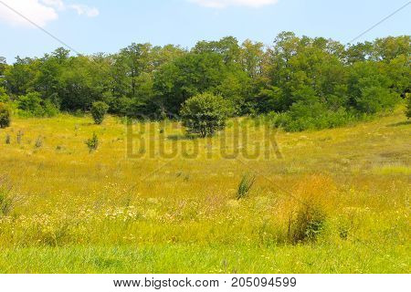 Summer Landscape With Meadow, Trees And Hills