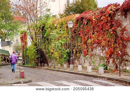 Urban landscape. street of the old town in autumn red ivy on the wall and street lamps