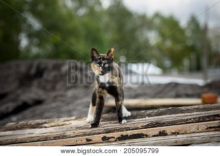 homeless cat sits on the roof. .