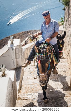 SANTORINI, GREECE - JUNE 30, 2017: Donkeys in Fira. They are used for people transportation from the harbour to the center of the village.