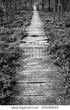 Nature hiking trail in summer with broken wooden boards black and white