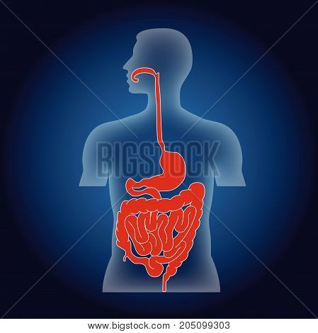 abstract digestive system human body on blue backround