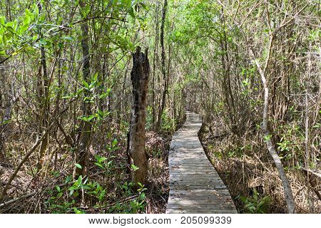 Footbridge in Boardwalk part of Mastic Trail. Mastic Trail is forest walking path in Mastic Reserve of Grand Cayman Cayman Islands (British Overseas Territory)