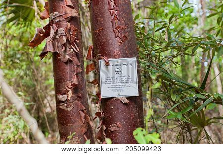 GRAND CAYMAN ISLAND - AUGUST 18 2017: National Trust Property sign on red birch tree on Mastic Trail. Mastic Trail is a forest walking path in Mastic Reserve of Grand Cayman Cayman Islands