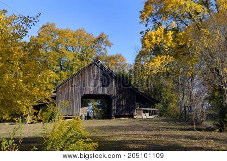 Gold and yellow leaves surround this rural farm in North Arkansas. Wooden barn is rustic and weathered.