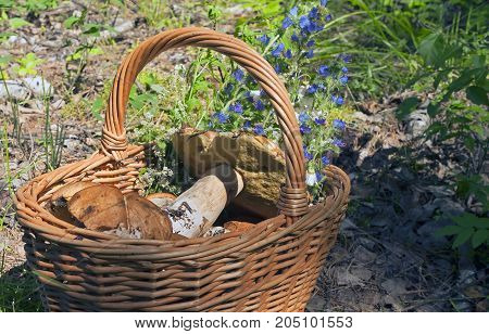 Edible Mushrooms Are Collected In The Wicker Basket